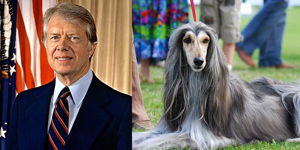 picture of Jimmy Carter next to Afghan Hound