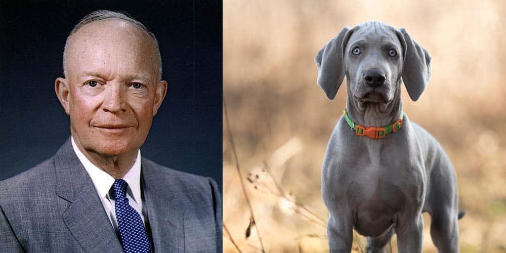 Dwight D. Eisenhower's first dog was a Weimaraner