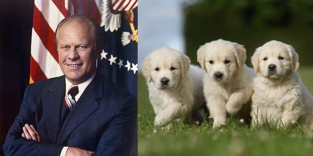 picture of Gerald Ford next to picture of Golden Retriever puppies