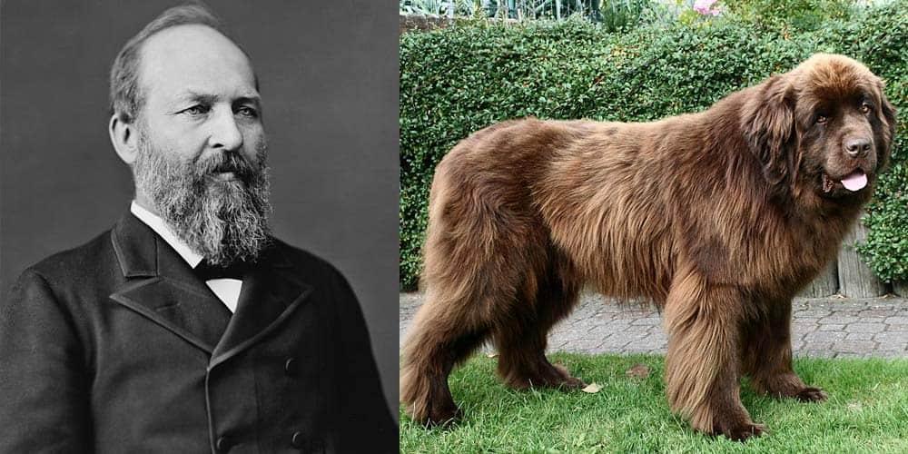 James A. Garfield had a Newfie dog