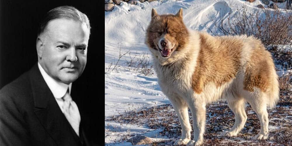 Herbert Hoover had nine dogs