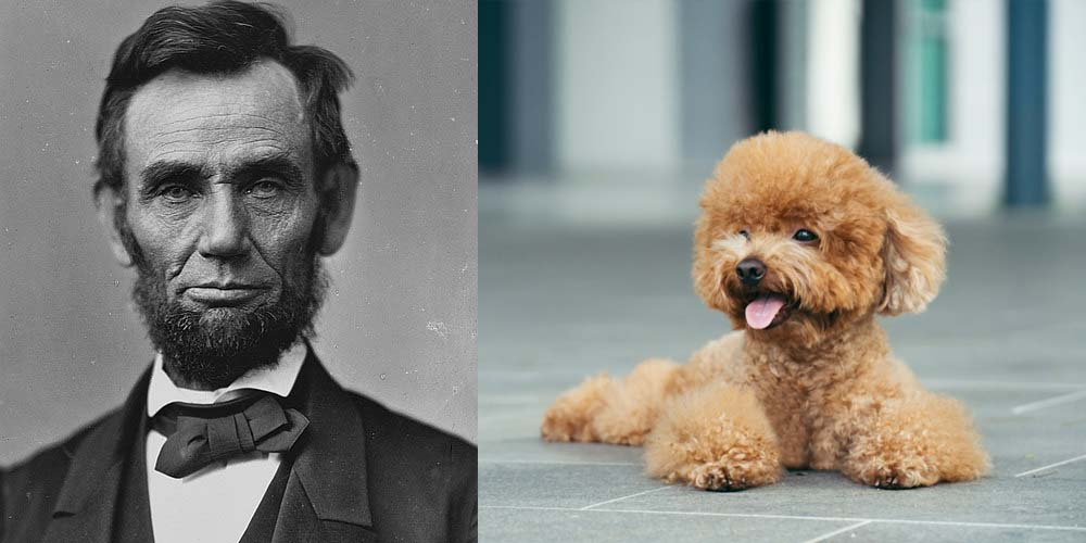 Abraham Lincoln had two dogs and one may have been a Poodle