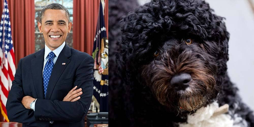 Bo Obama was the First Dog under the Obama Administration