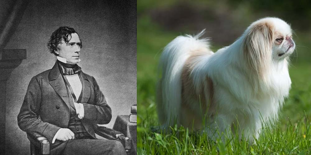 President Franklin Pierce's First Dog was a Japanese Chin