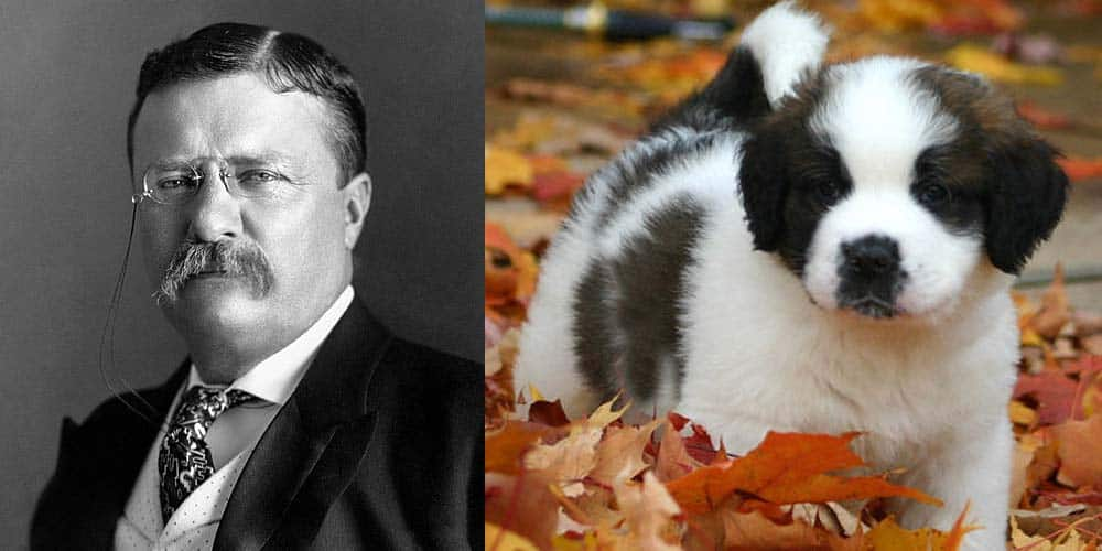 picture of Theodore Roosevelt and Saint Bernard Puppy