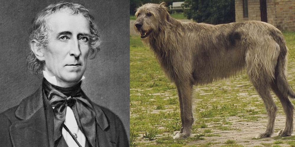 President John Tyler had a Wolfhound dog