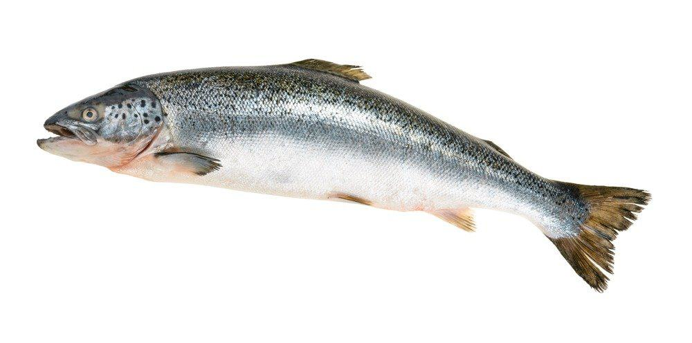 Salmon isolated on a white background