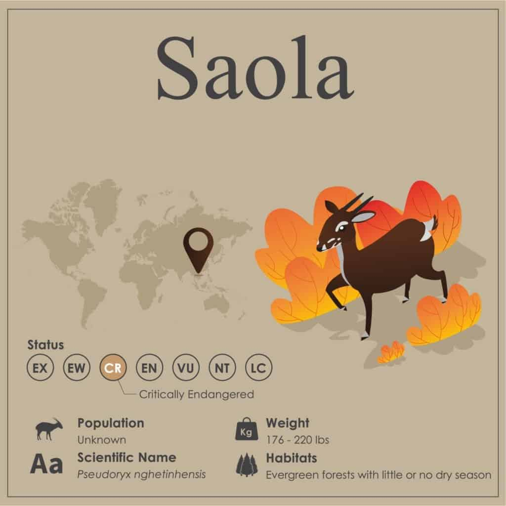 Saola Endangered Species Infographic